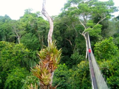 Canopy Walk in the Amazon Rainforest Peru, before my shamanic healing