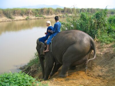 Rescued elephants at Four Seasons Golden Triangle