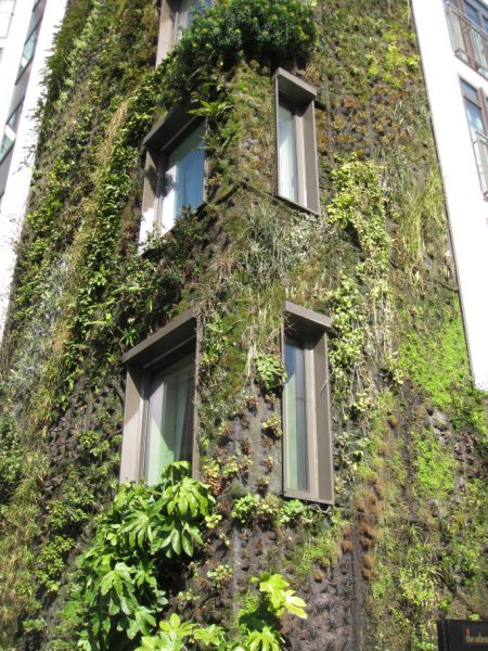 About Mayfair, the living wall at the Atheneum Hotel
