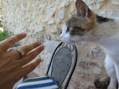 Getting engaged in Italy, celebrating with a cat
