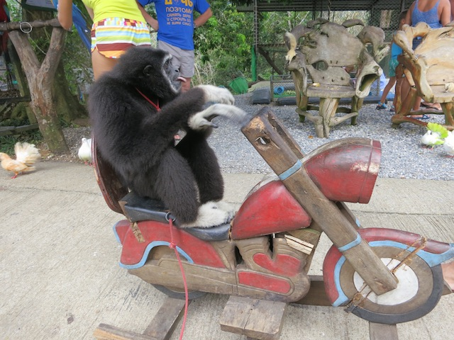 Koh Samui Valentine, Monkey on a wooden motorcycle