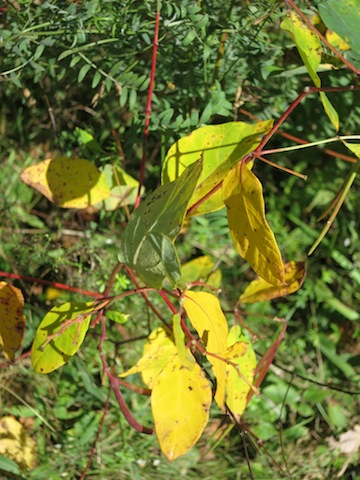Cycling Confederation Trail in PEI, leaves in fall