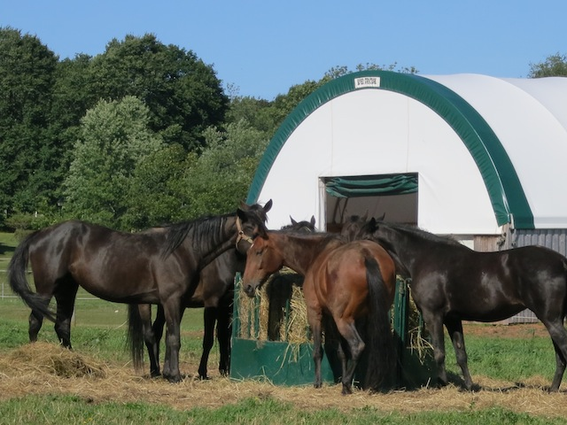 Cycling Confederation Trail in PEI, horses