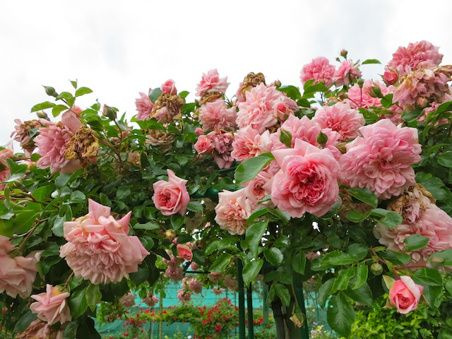 Luxury travel at Giverney France at Monet Garden