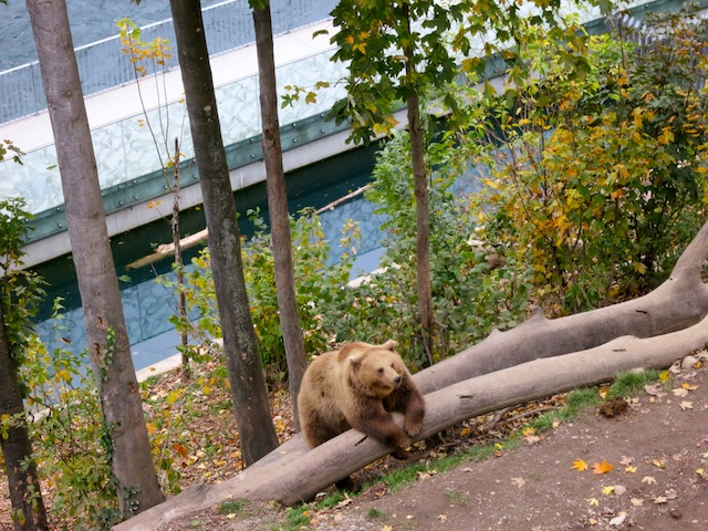 Bern Bear Park in Switzerland Best free luxury travel activities and perks
