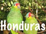 Honduras Travel Tips