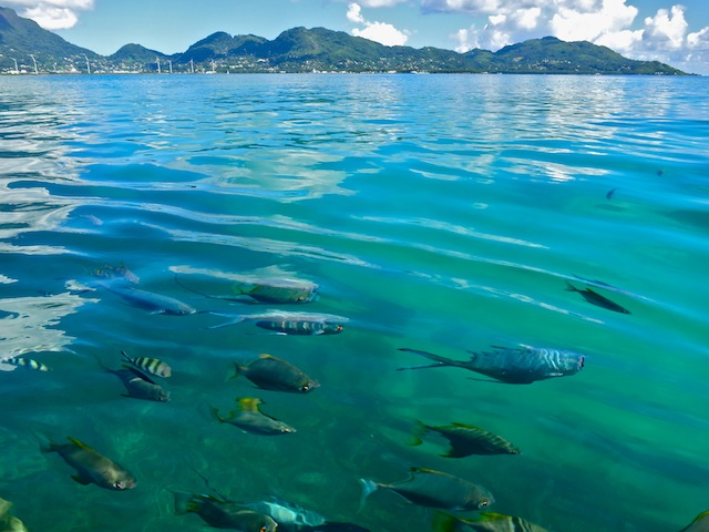 Fish in the water in the Seychelles