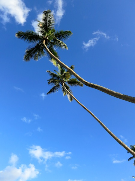 Palm trees blue sky in Seychelles