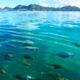 Seychelles Islands Ste Anne Marine Park