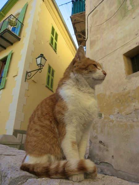 Cat in Menton Old Town South of France