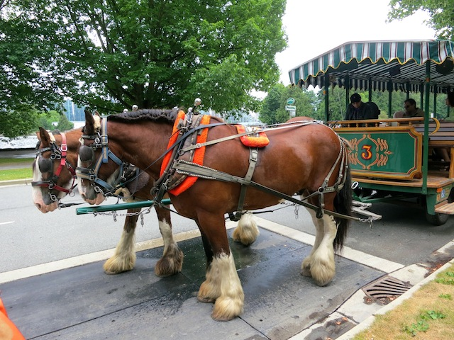 Carriage ride on horse in Stanley Park Vancouver