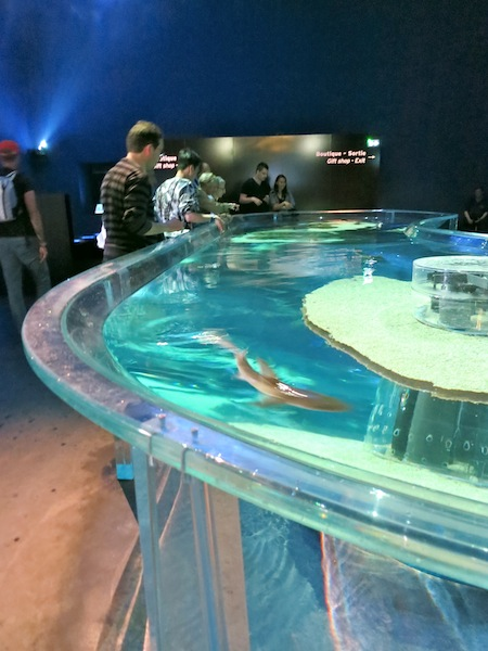 One day in Monaco visit the Museum of Oceanography