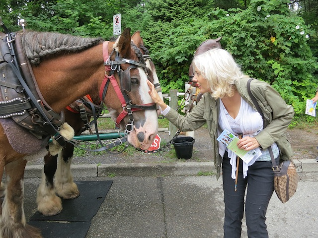 Carriage ride in Stanley Park with Bud and Weiser