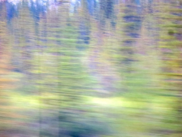 Amazing Rocky Mountaineer wildlife photos blurry shot