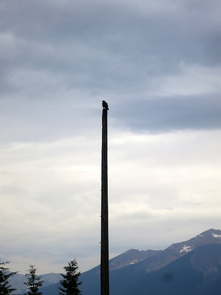 Shot of an osprey on a pole Rocky Mountaineer