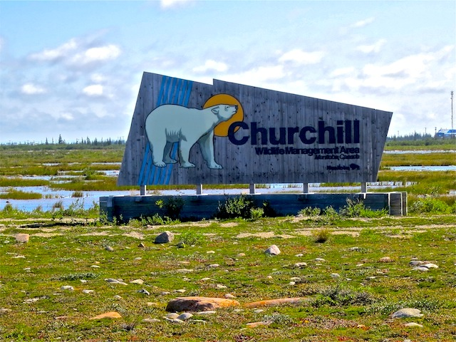 Churchill is the polar bear capital of the world