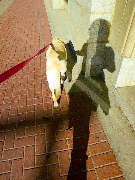 Dog walking shadow