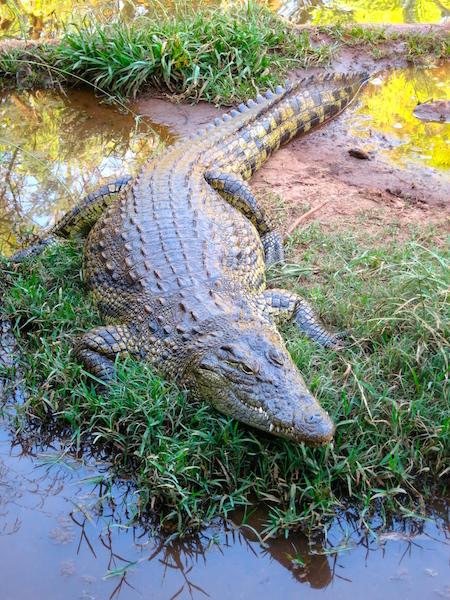 Kwena Crocodile Farm Sun City