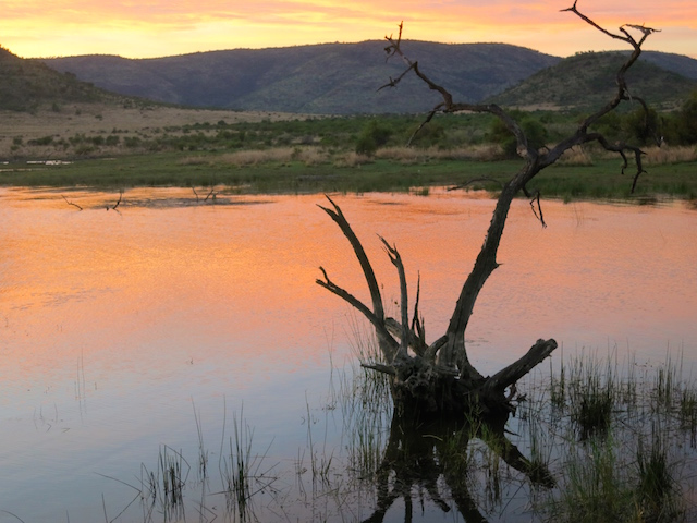 Pilanesberg Game Reserve hot air balloon safari sunrise