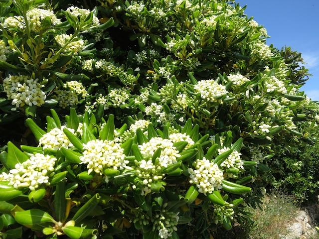 Flowers of Costa Brava Spain
