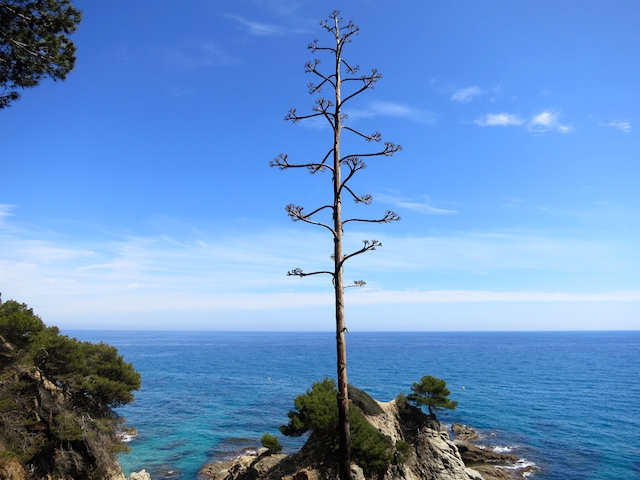 One day in Lloret de Mar, beautiful landscape of Costa Brava