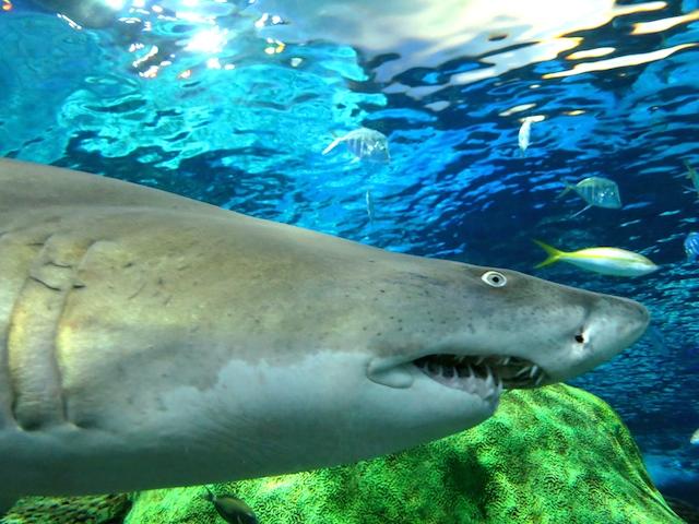 Ripley's Aquarium, Toronto's newest attraction