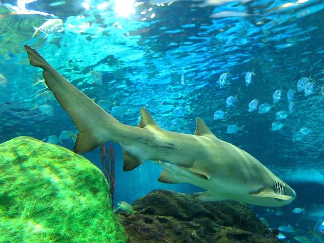 Sharks at Ripleys Aquarium Toronto