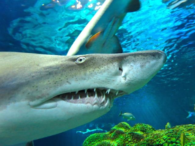 Visit Ripley's Aquarium Toronto, shark information