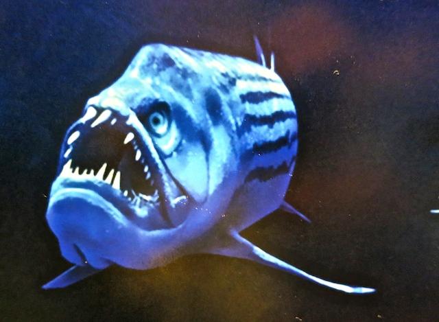 Visiting Ripley's Aquarium Toronto, Xiphactinus