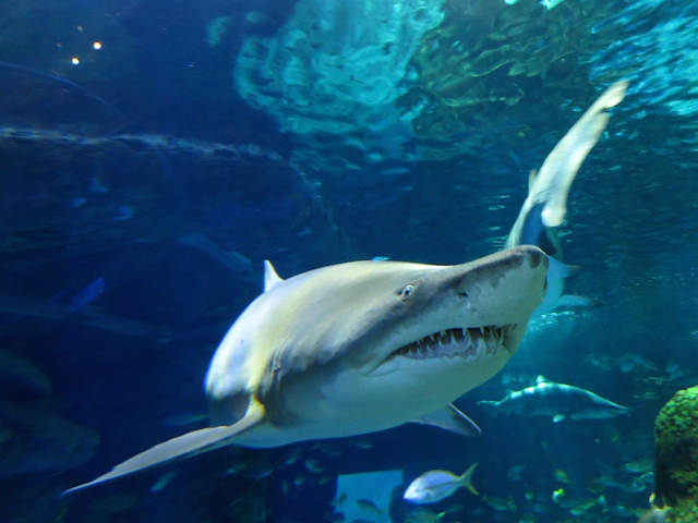 Visiting Ripley's Aquarium Toronto to see sharks