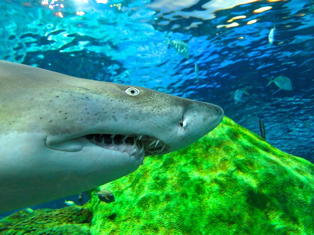 Visiting Ripley's Aquarium of Canada in Toronto, sharks