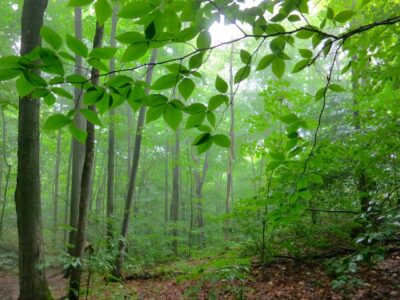Luminous forest, hike the Bruce Trail