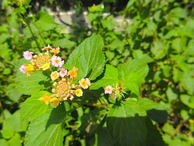 Visiting theMount of Beatitudes flowers