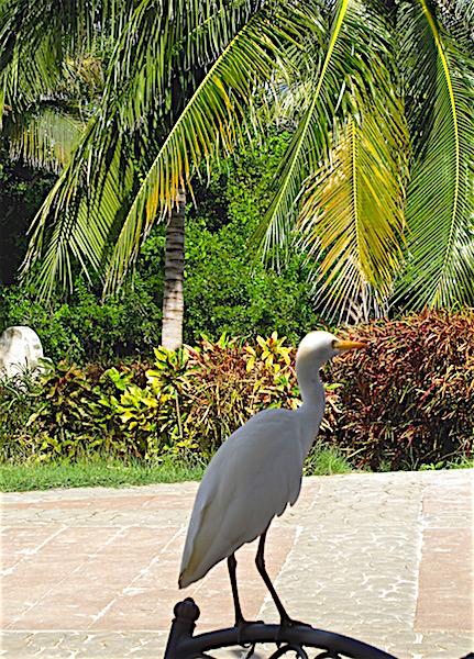 Birds of Varadero