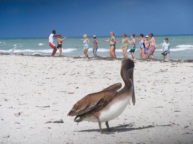 Paradisus Princesa del Mar, Varadero blog, pelican