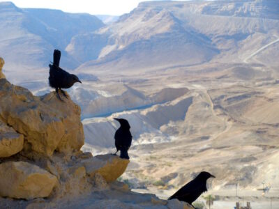 Israel itinerary for a week birds in desert