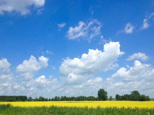 Saskatchewan field