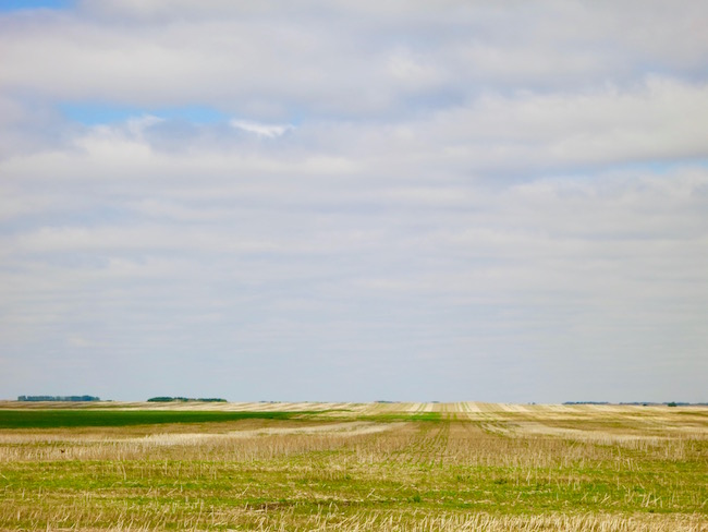 Saskatoon restaurants Saskatchewan terroir prairie field