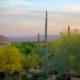 Sonoran Desert Four Seasons Scottsdale Resort