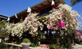 puerto-vallarta-bontanical-gardens