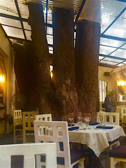 tree-in-tre-piatti-restaurant-in-puerto-vallarta-1