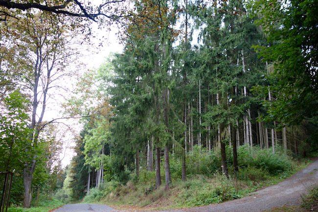 Hiking Marianske Lazne