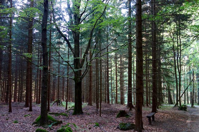 What to do in Marianske Lazne, hike in the forest