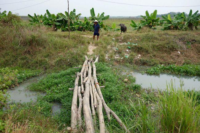 Man with water buffalo Vietnam tour