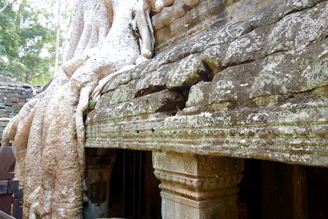 Tips for visiting Ta Prohm Ankgor Siem Reap