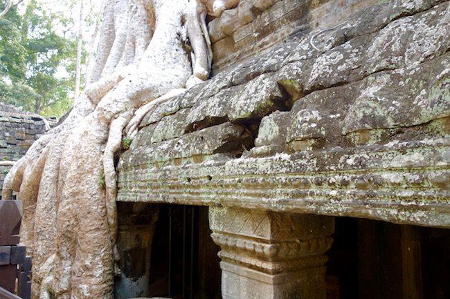 Tips for visiting Ta Prohm Ankgor Siem Reap