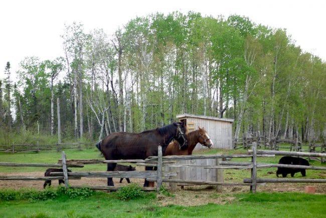 Horses and bears at Wild Zoo Saint Felicien