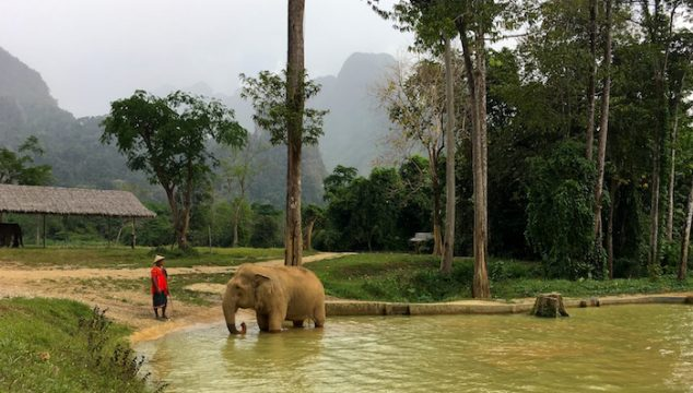 Elephant Hills tented camp, Thailand, an ethical animal experience