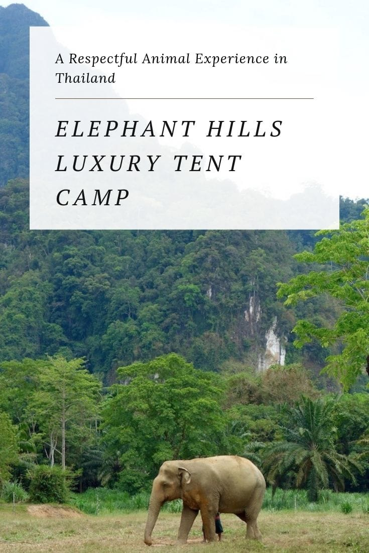 This award-winning tented camp in Krabi Province in Southern Thailand offers an ethical animal experience (no riding) in a luxury camping environment. It\'s also a family-friendly resort with outdoor adventures such as hiking and cultural activities. #thailand #travel #Krabi #southernthailand #elephants #luxury #glamping #best #thai #resorts