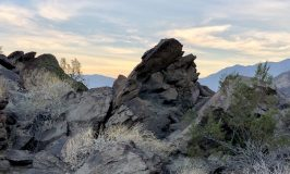 Hiking the Palm Springs Museum Trail